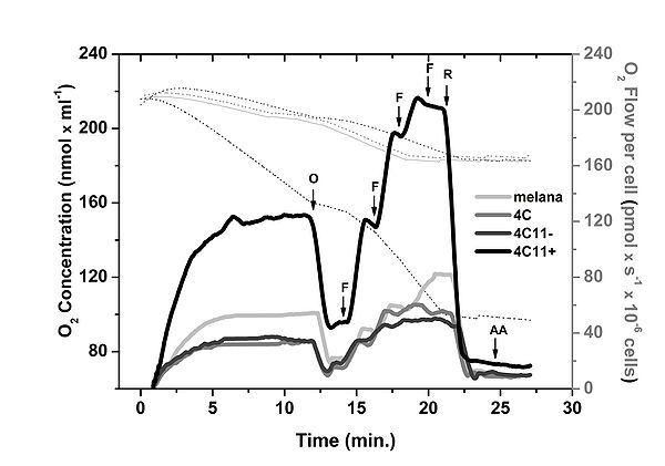 High-resolution respirometry showed an increase in oxidative metabolism in metastatic cell line