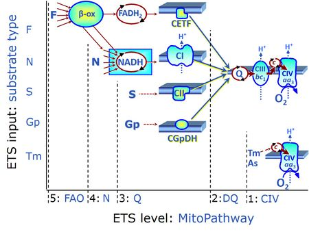 Multiple ET pathways with FNSGpCIV